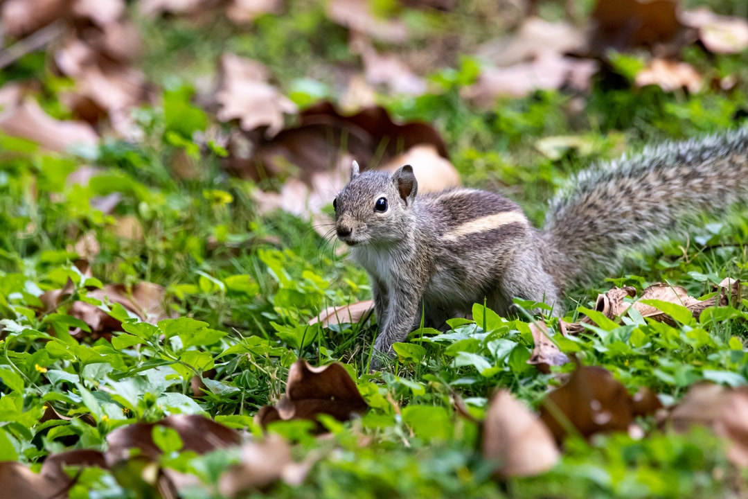 Squirrel alert and ready for action