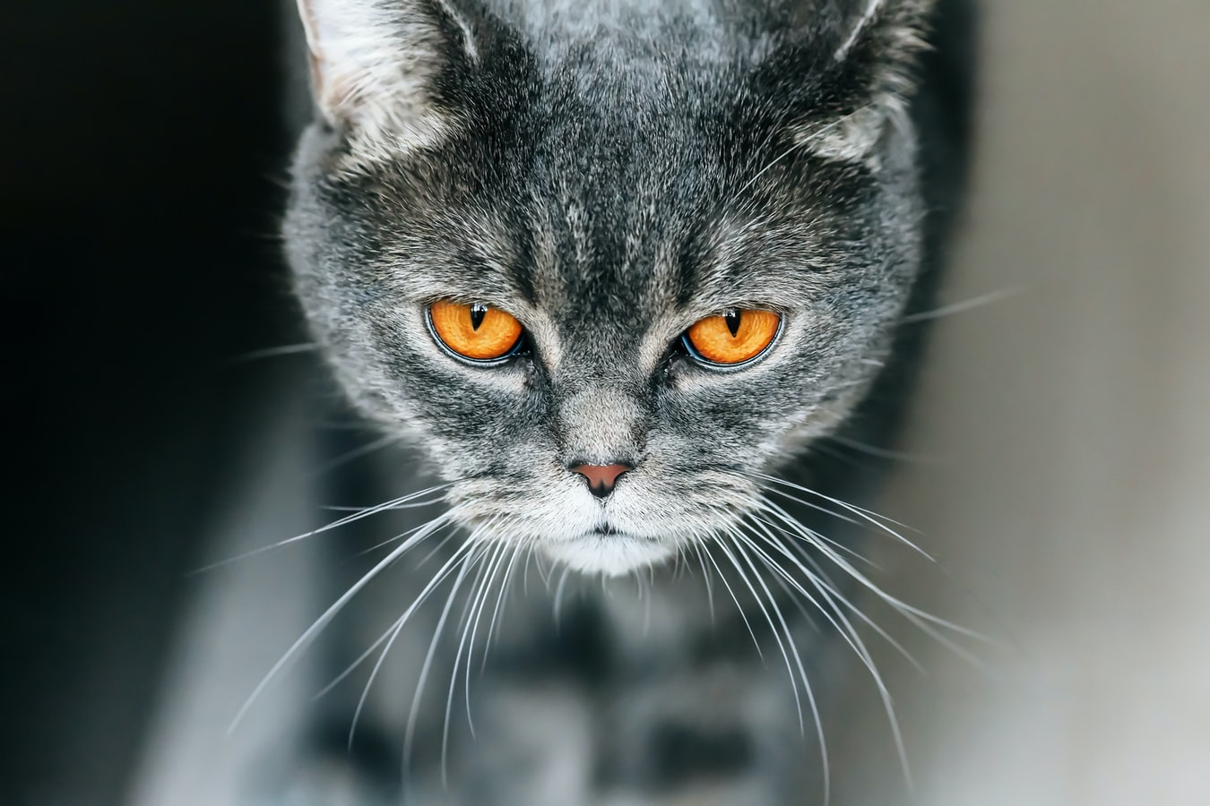 Picture of a mischievous cat Photo by Tengyart on Unsplash