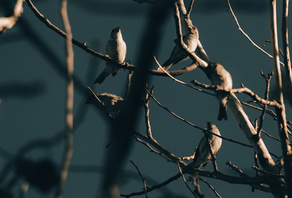 several birds perching tree branches