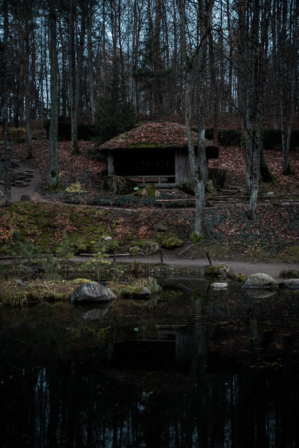 shed in the woods near body of water