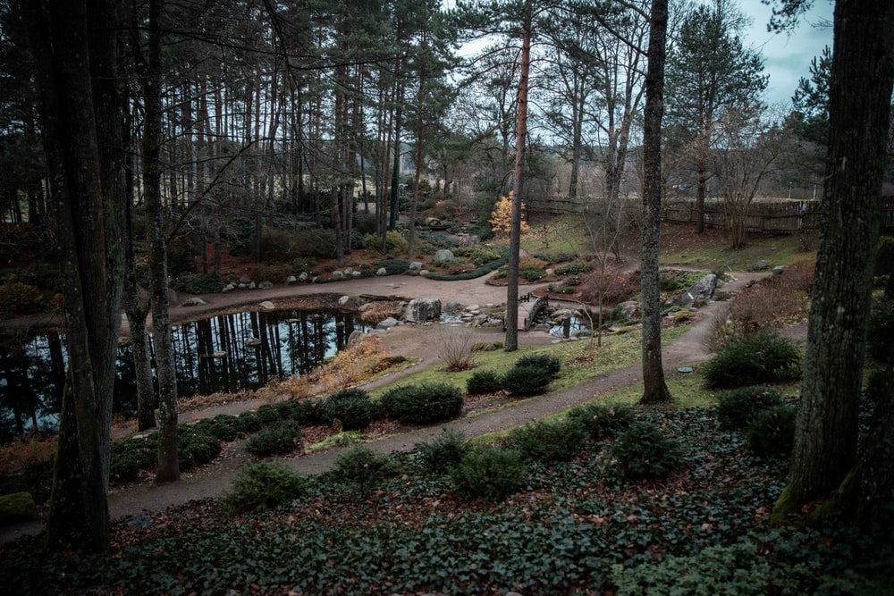 view photography of park with pond and trees
