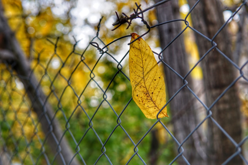 selective focus photography of leaf stock in chain link fence