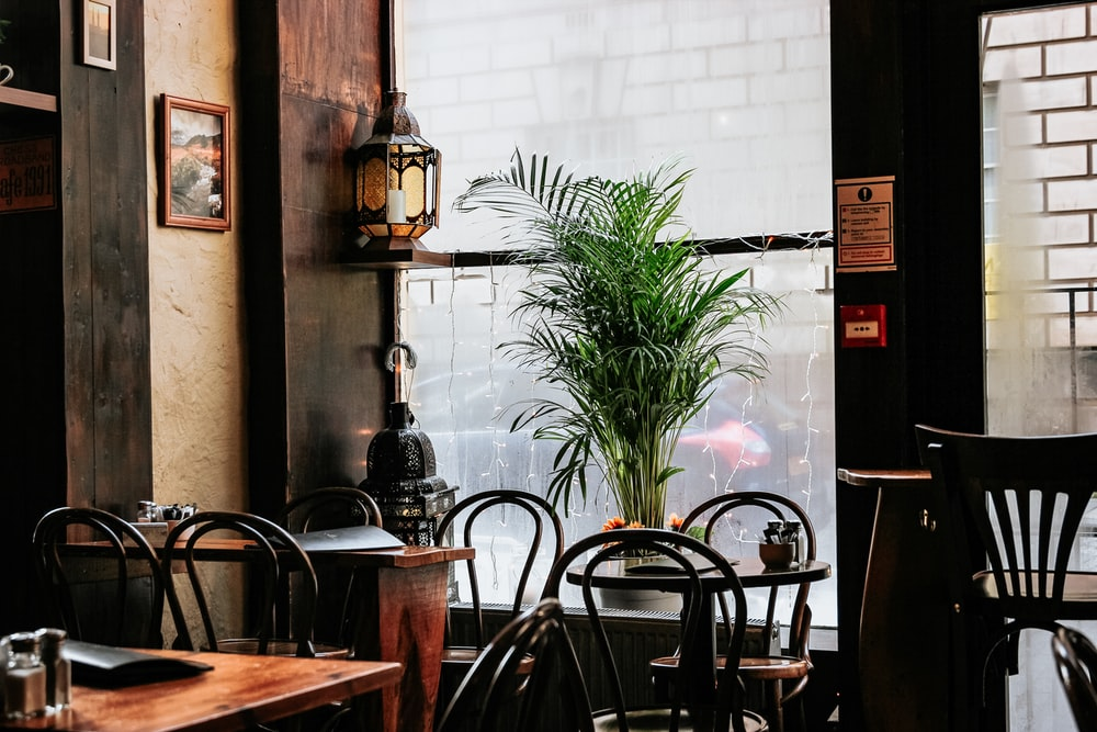 brown wooden dining tables near window and plant