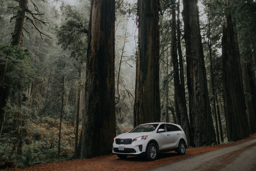 parked white SUV beside tree