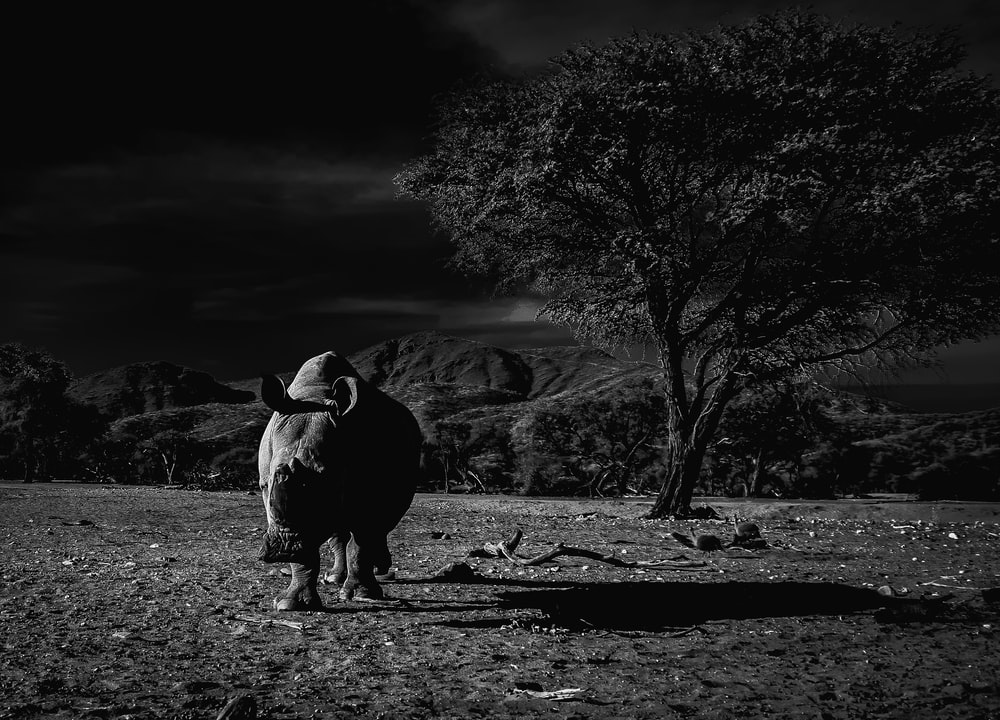 greyscale photo of rhinoceros