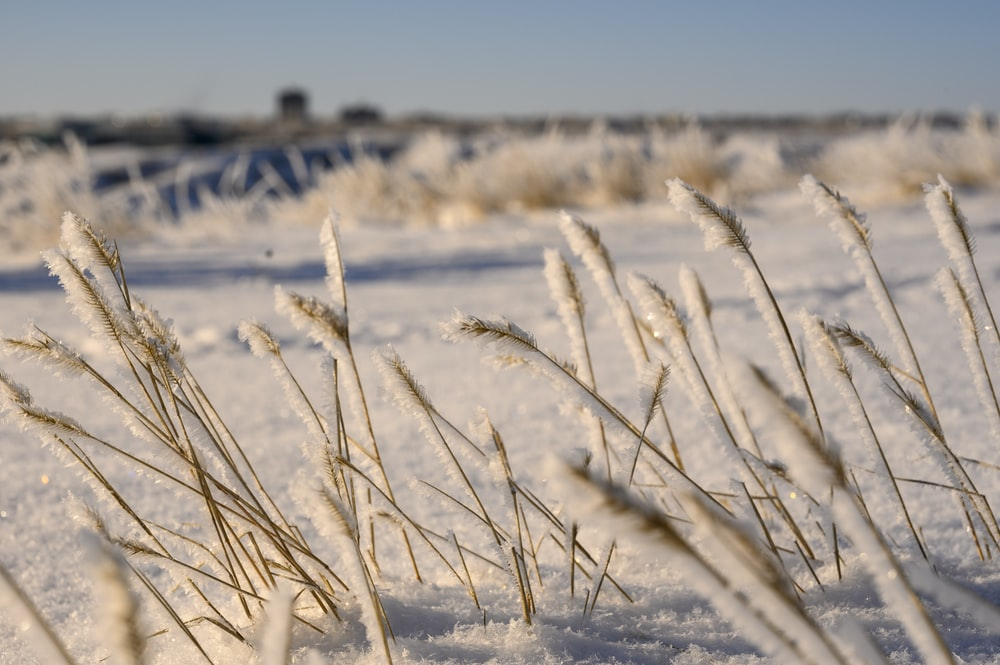 selective focus photography of snow covered flowers grass