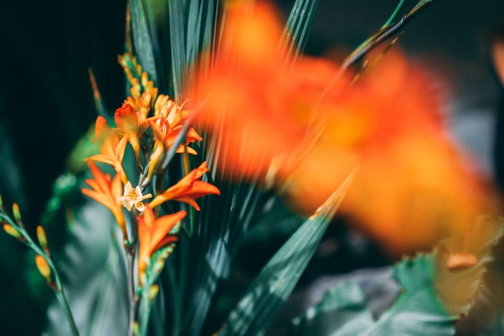 view of orange bird-of-paradise flower