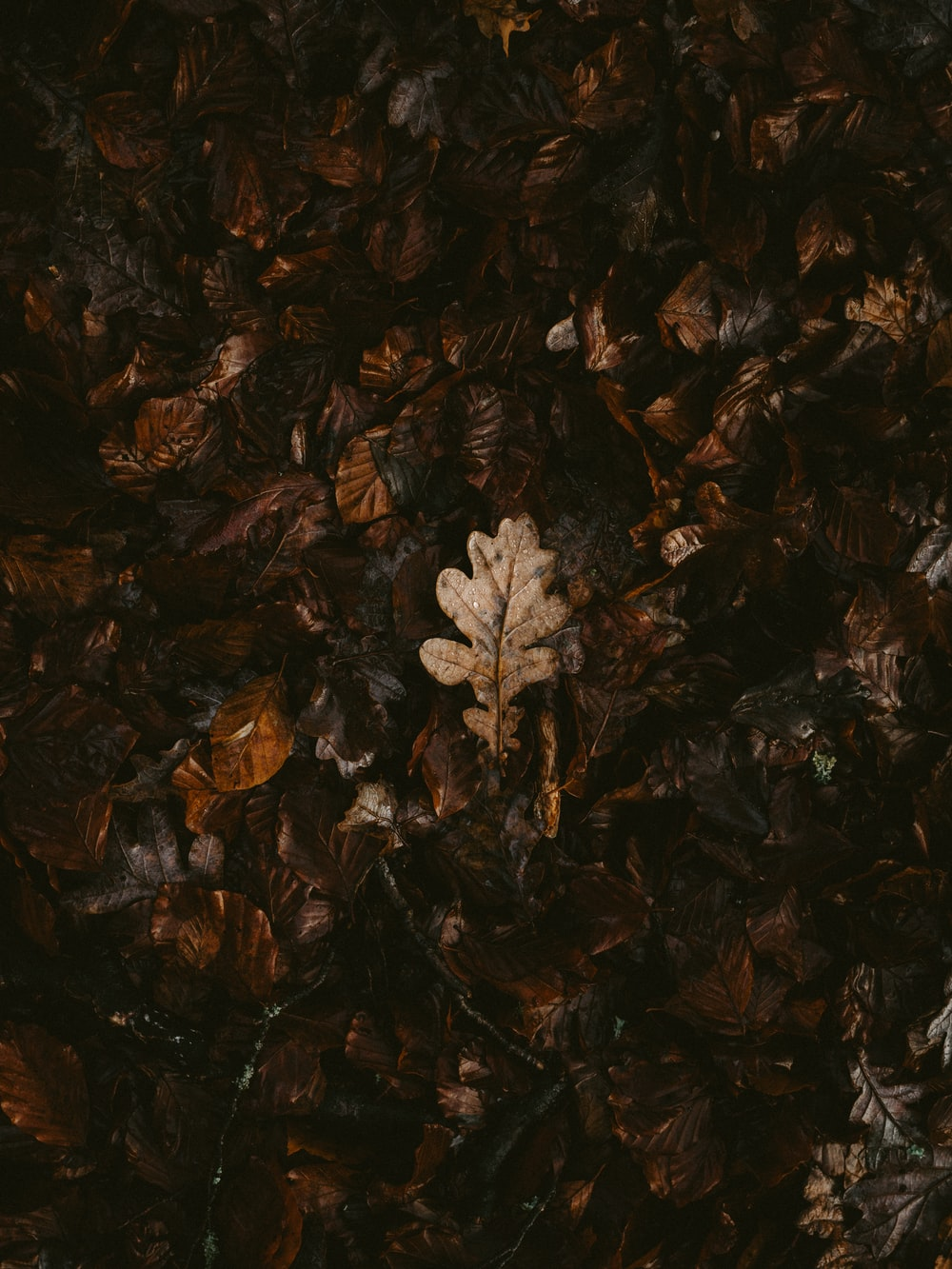 withered leaf on ground