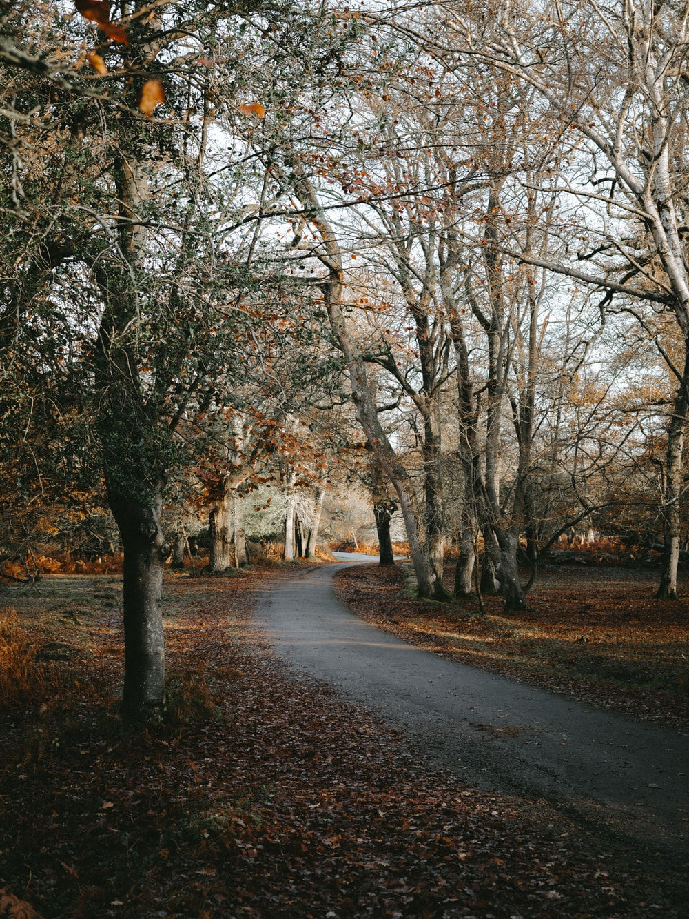 empty pathway between trees