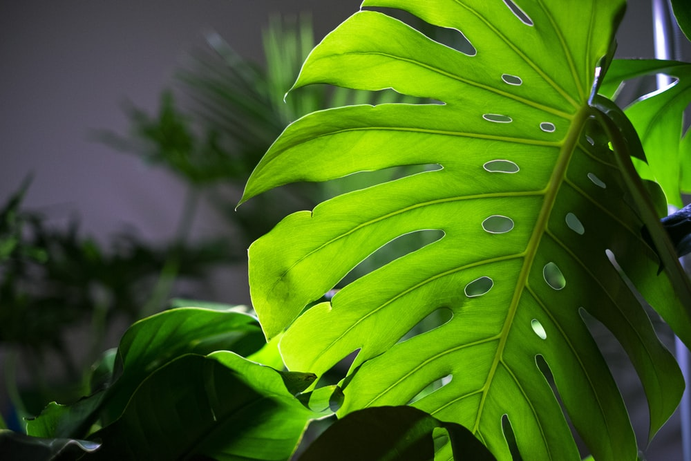 green swiss leaf during daytime