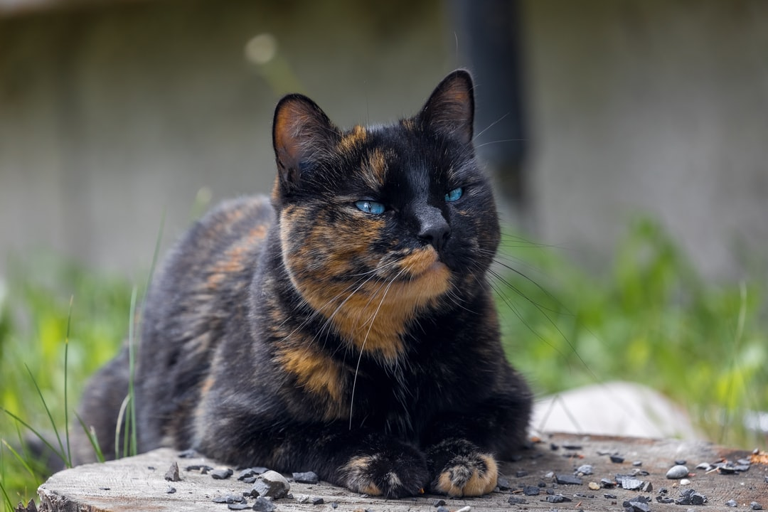 When I went to Banff, I stayed in a hotel called A Banff Boutique Inn. They had 2 cats, Tinker and Bubbles; this is Bubbles. She is such a lovely and friendly cat, it's so easy to capture her personality in the photo.