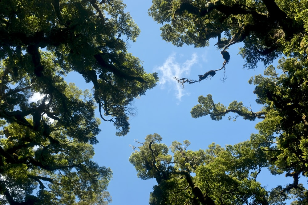 low-angle photography of green trees under blue and white sky during daytime