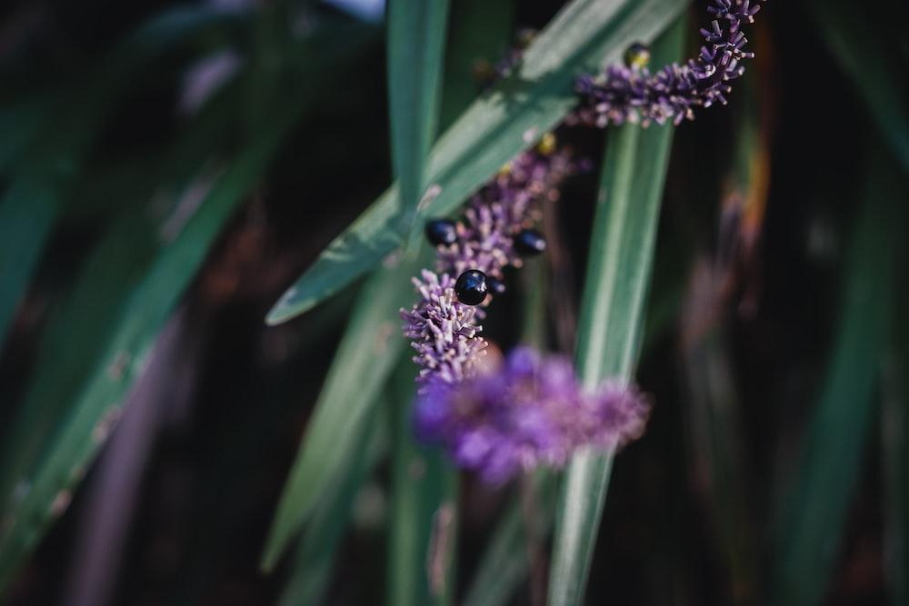 purple petaled plant