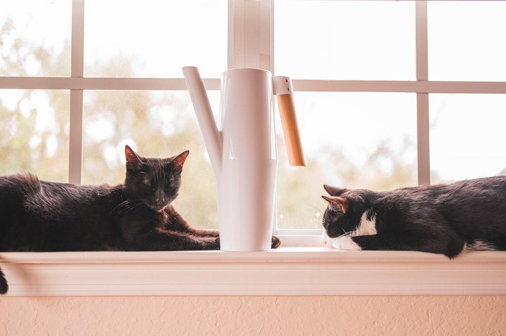 two black and tuxedo cat lying beside window