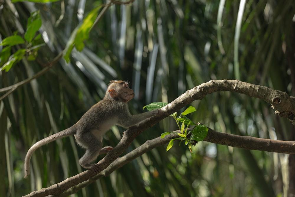 primate climbing tree