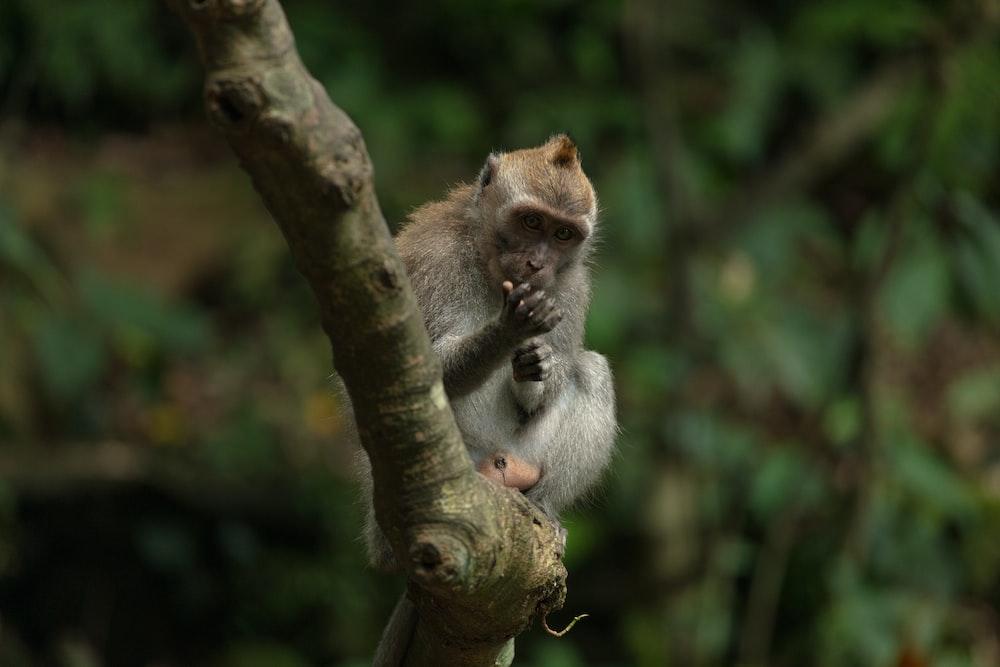 monkey sitting on tree branch