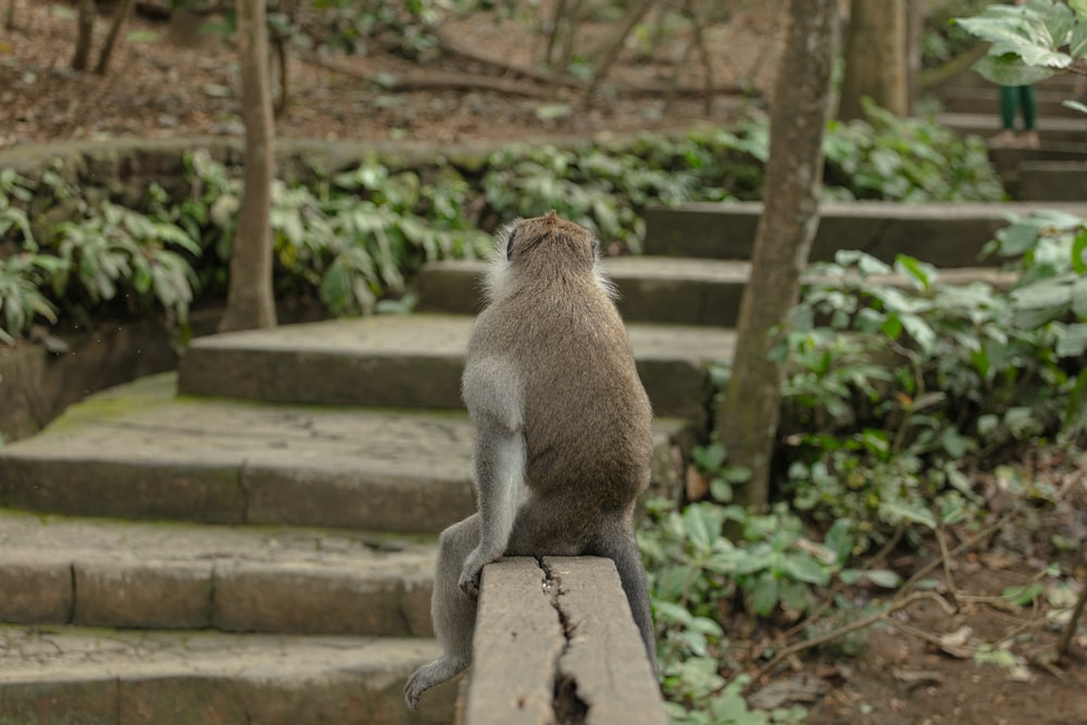 primate sitting on wooden bench
