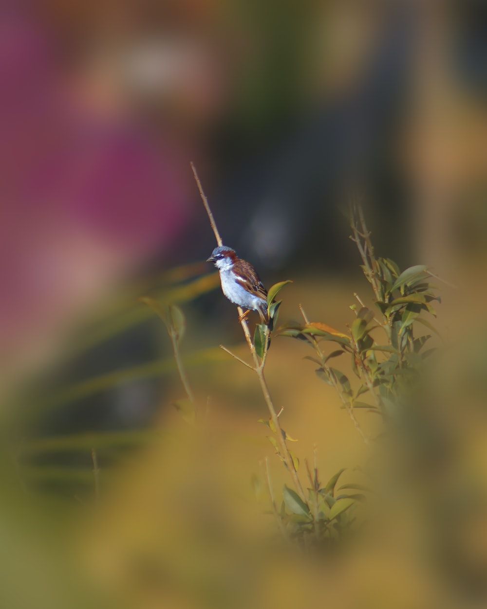 brown and white bird on plant