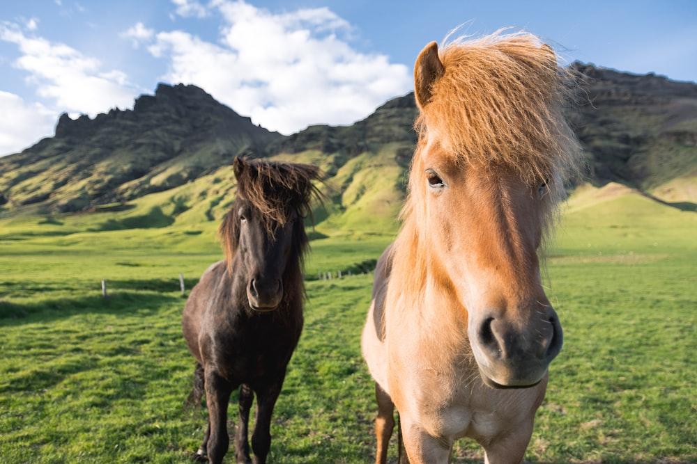 horse near mountain range