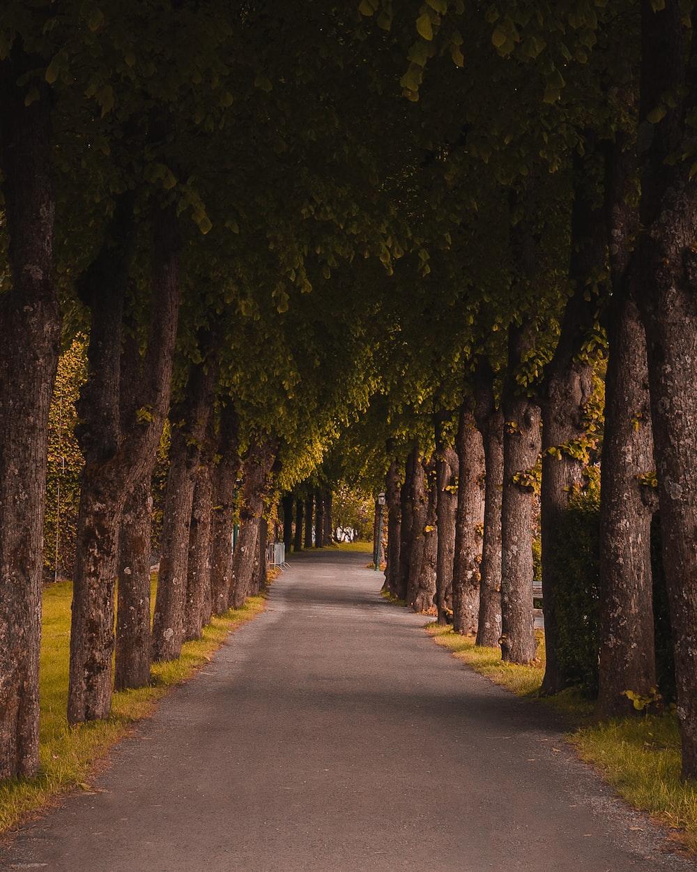 tall trees beside street