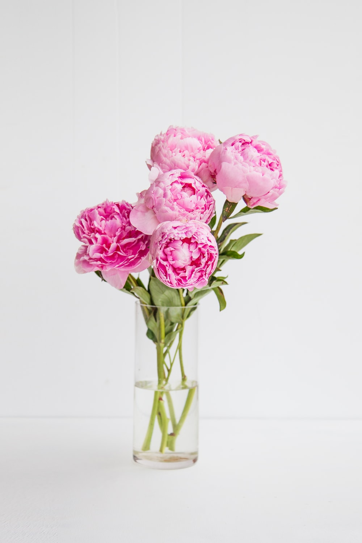 pink rose flowers in vase