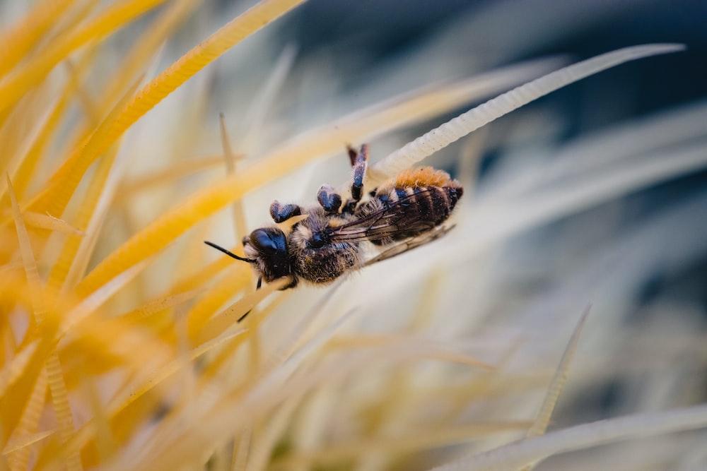black and yellow wasp photograph
