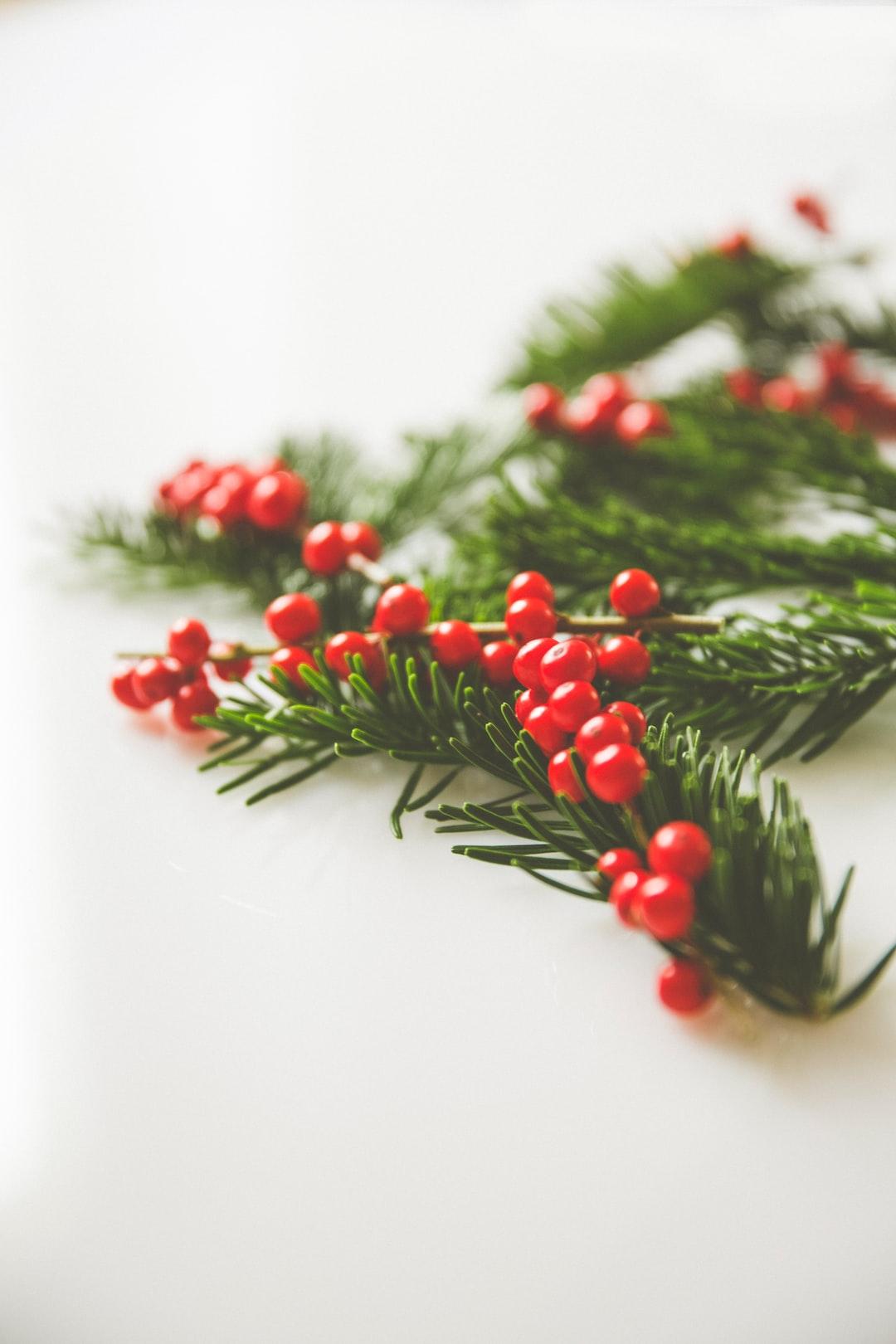 Christmas decoration fir branch with amercian holly Feuilles De Houx Et Baies