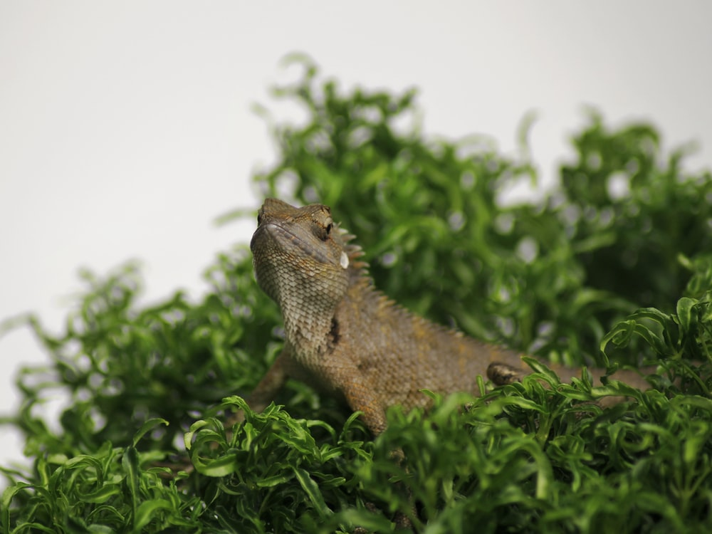 brown bearded dragon on green leafed plant