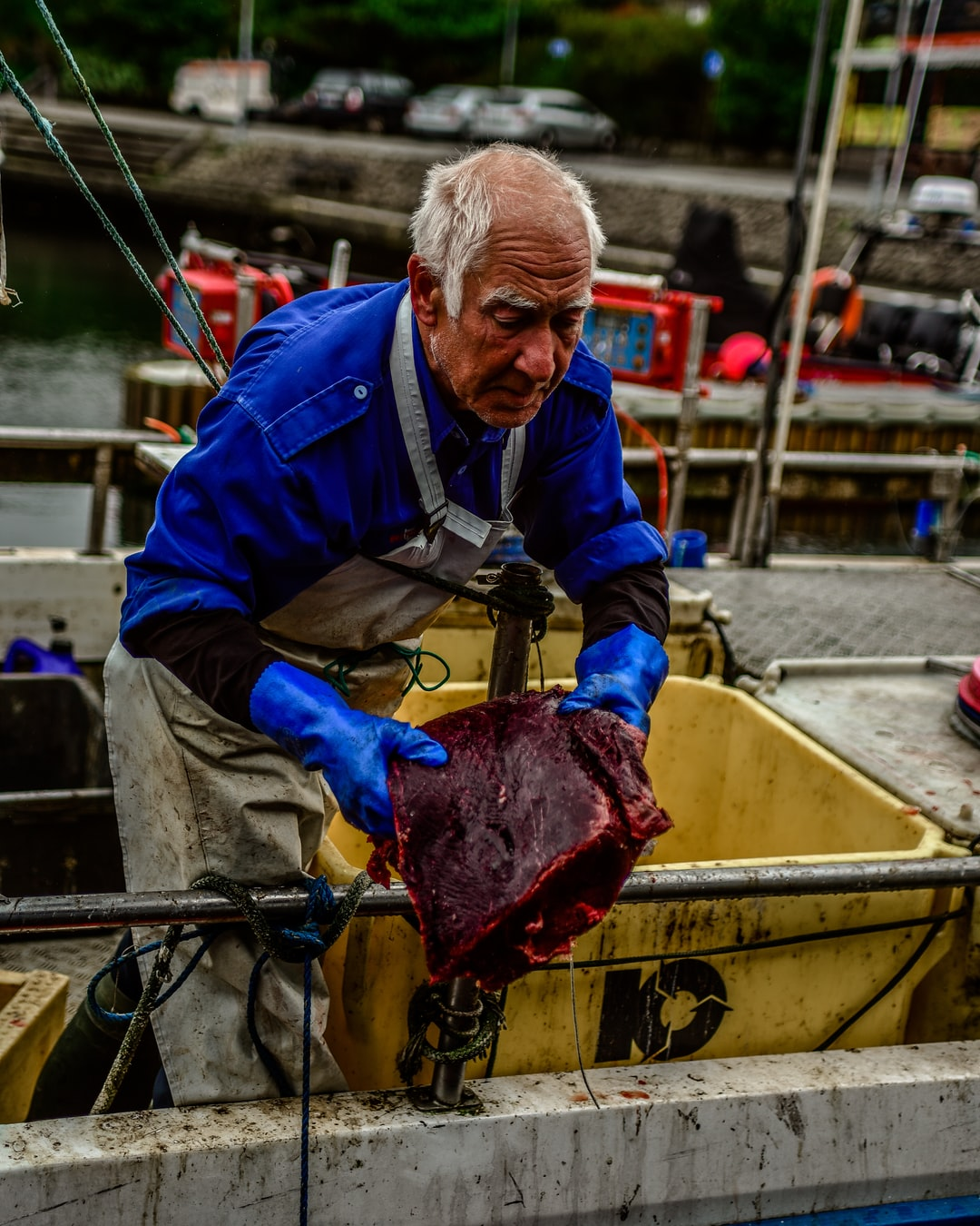 Man coming back from the whale hunt on the Faroe Islands.