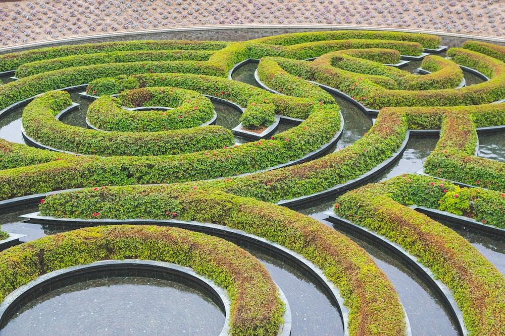 green spiral hedge
