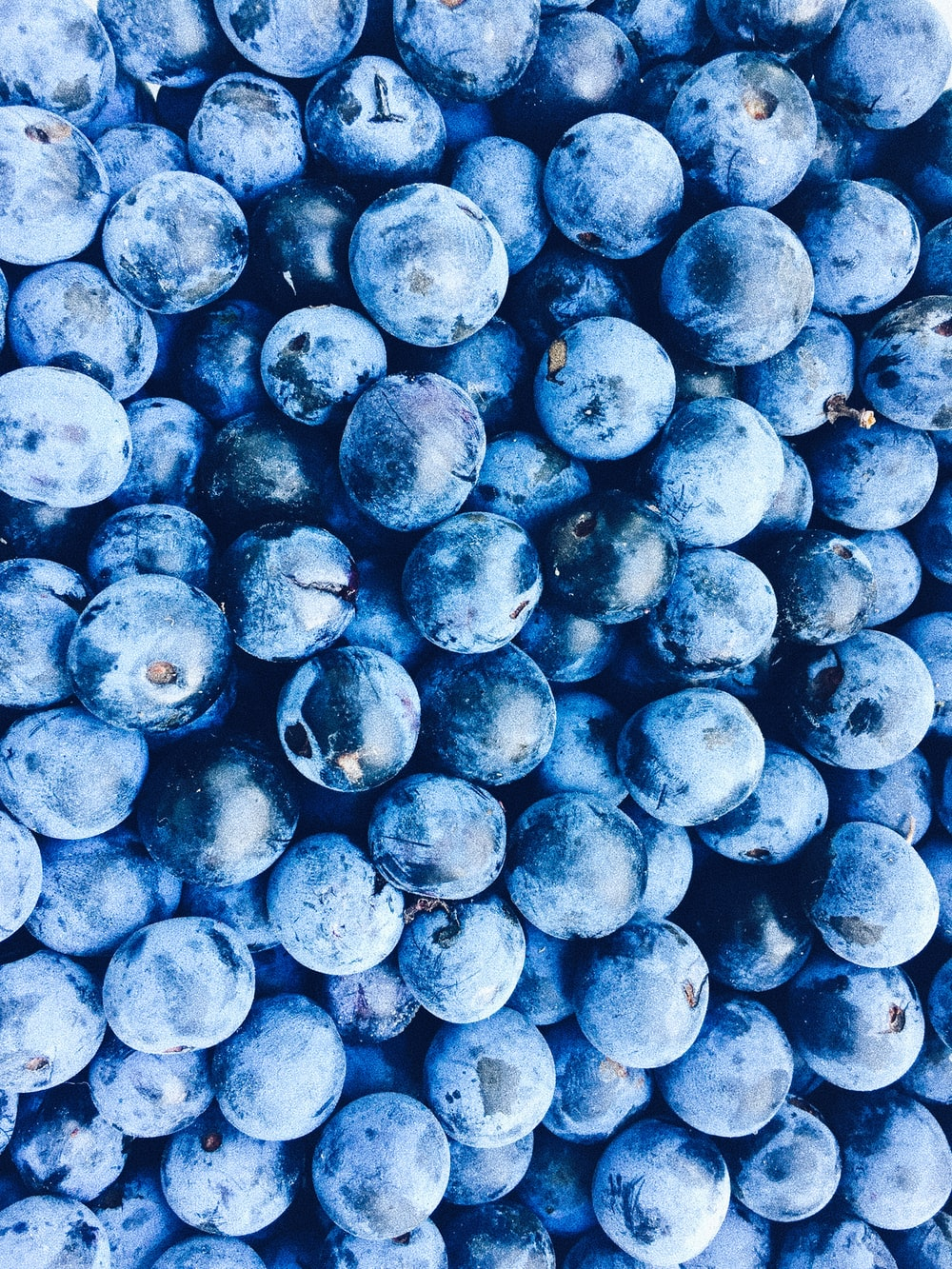 blue berry lot