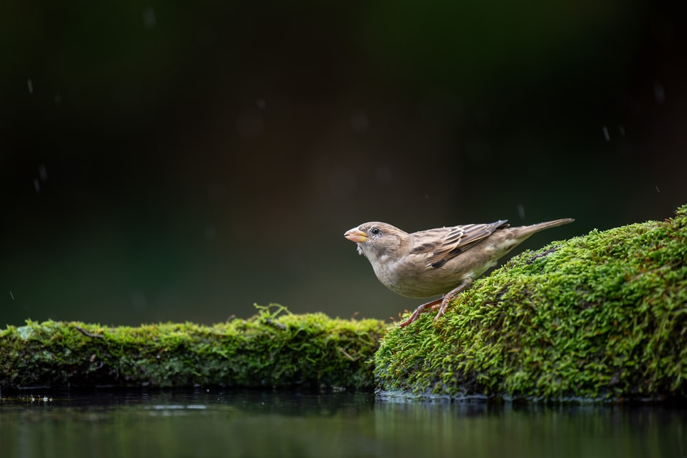 bird perching on mossy rock near water
