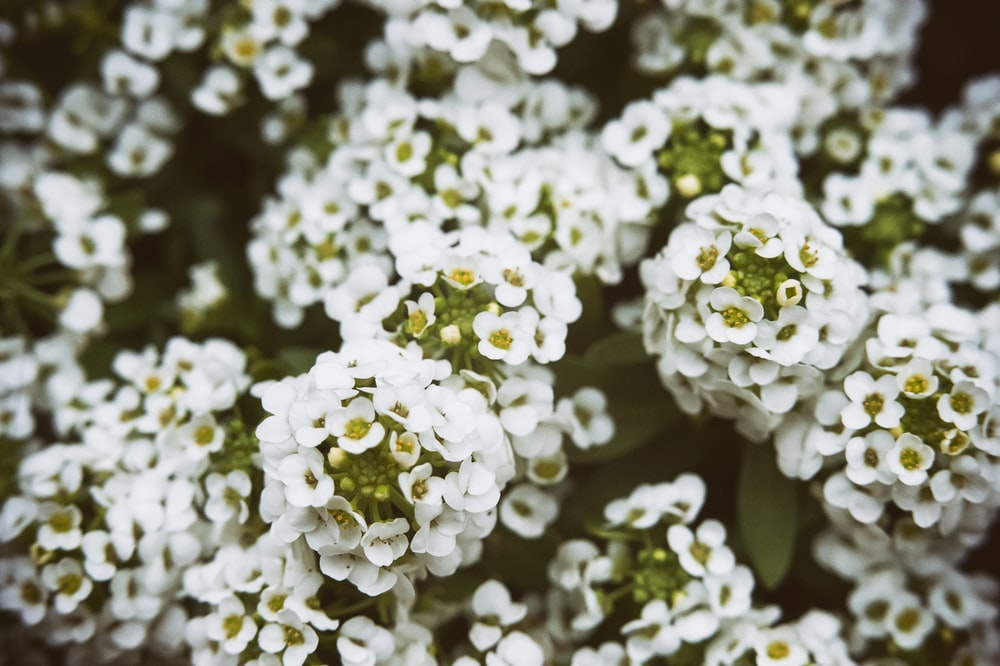 white cluster flowers during daytime
