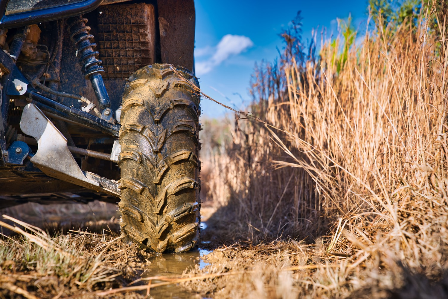 A ground level view of a side-by-side tire on a wet trail in the middle of a year old cut-over.