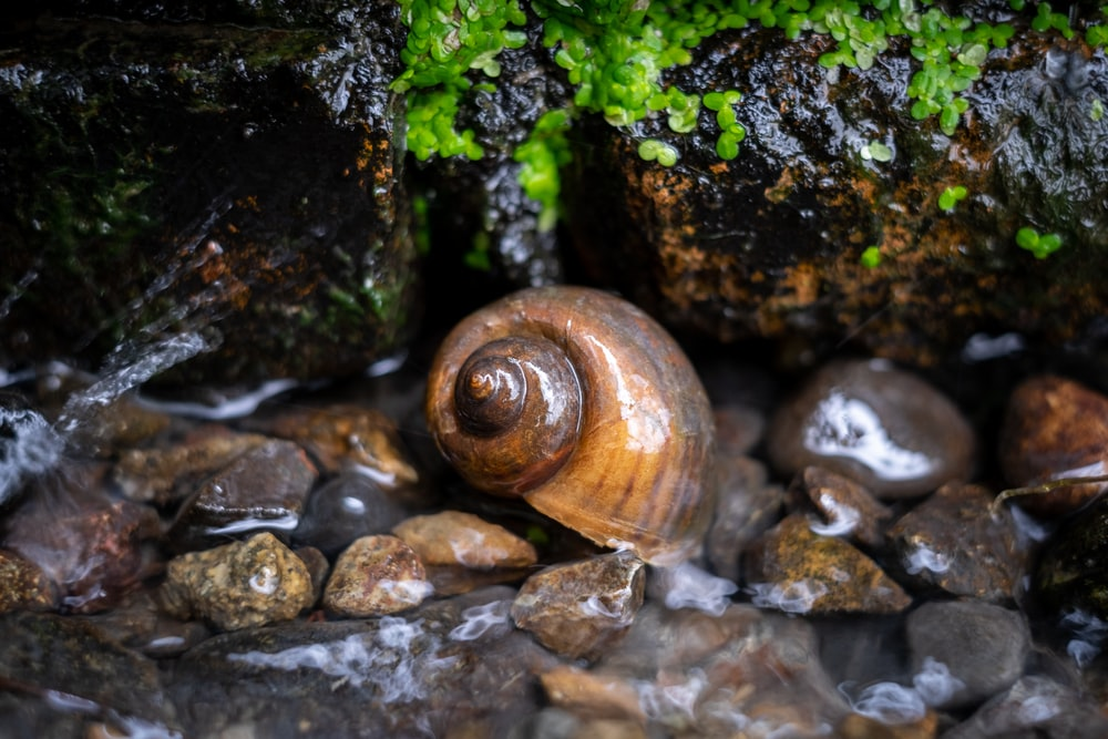 brown snail on pebbles