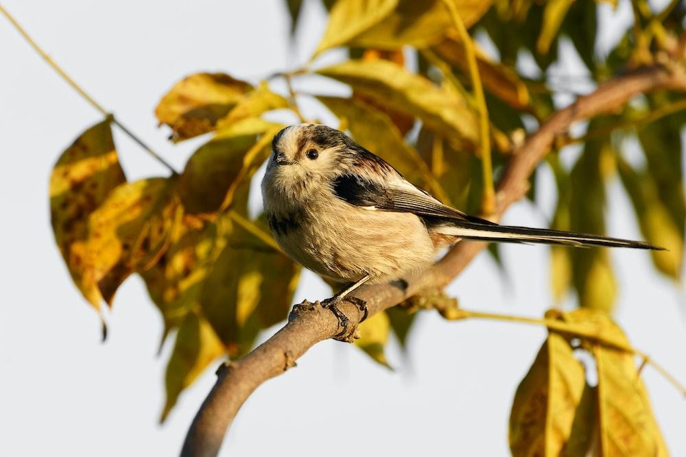 brown bird perching on branch