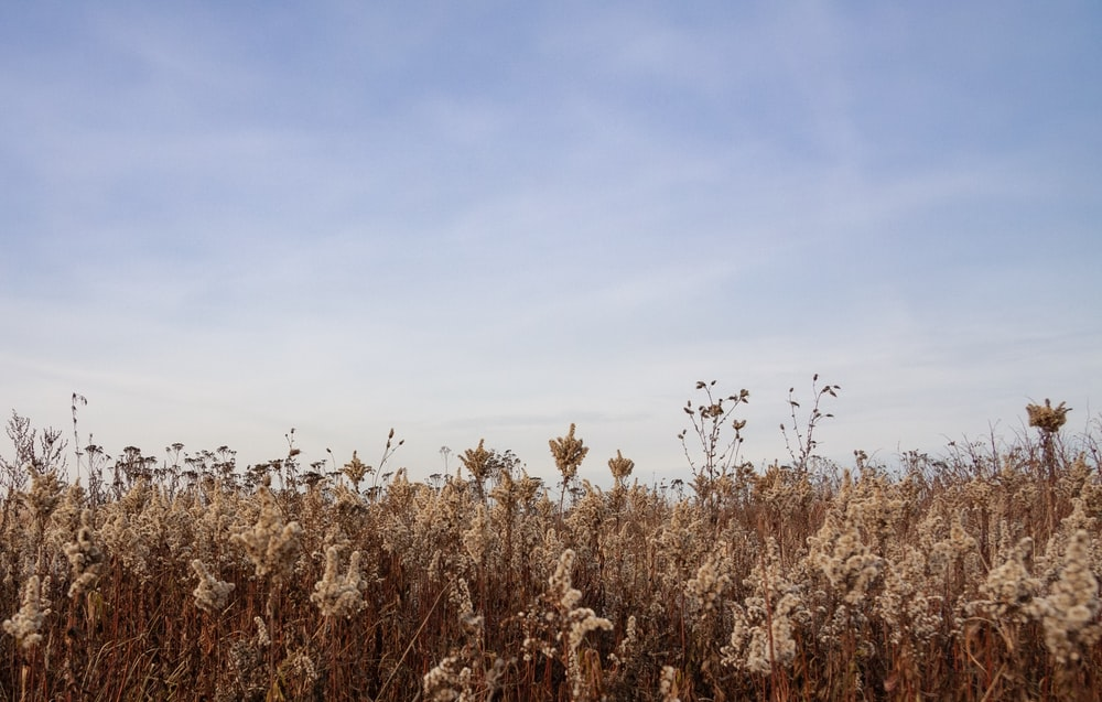 view photography of brown plant fields
