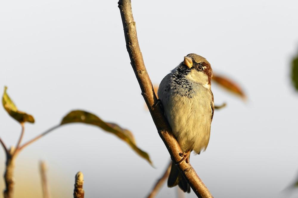 brown bird perching on stick branch