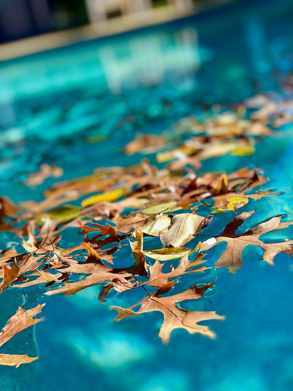 brown leaf floating on water