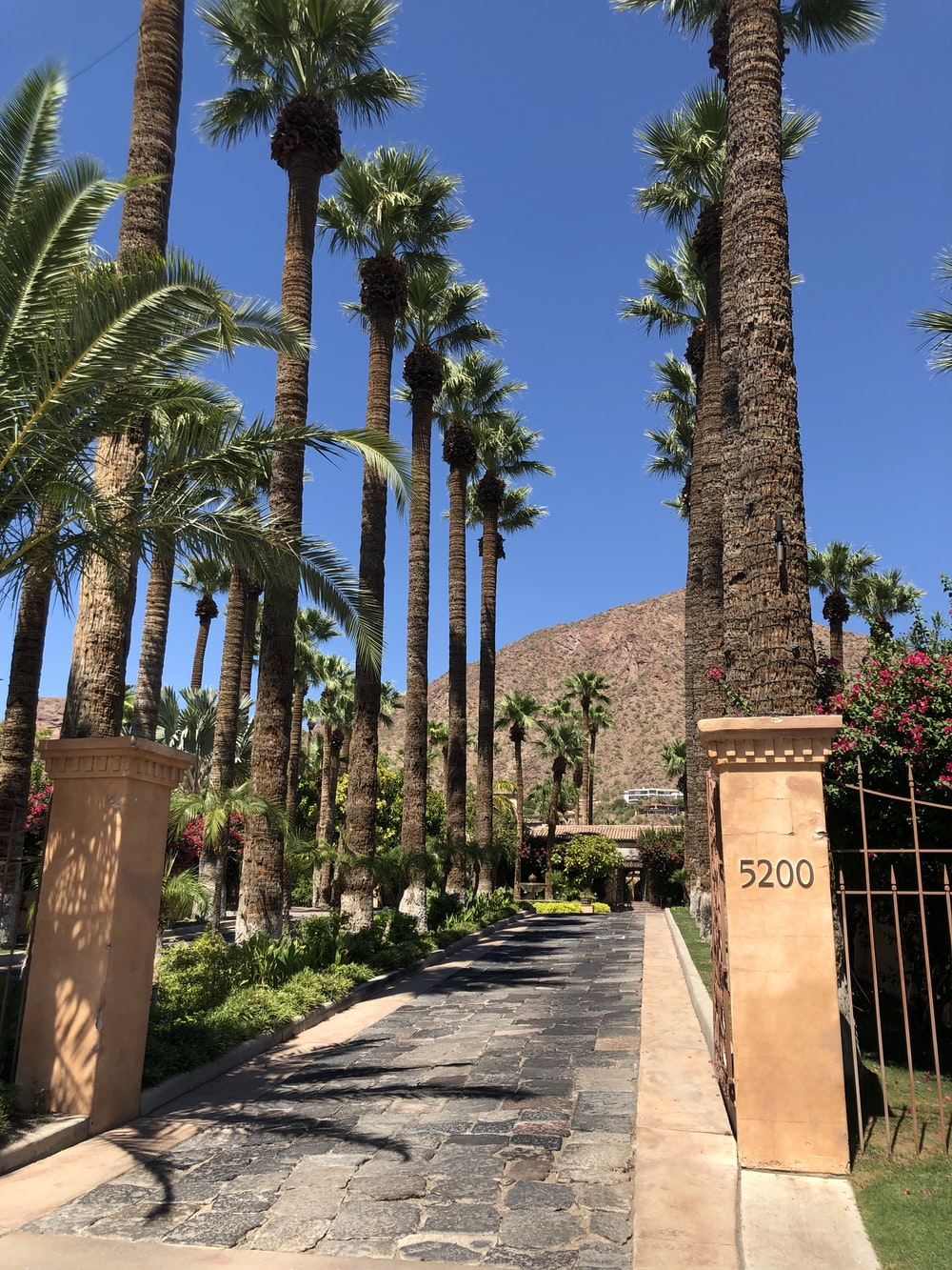 gray pathway in between green palm trees viewing mountain