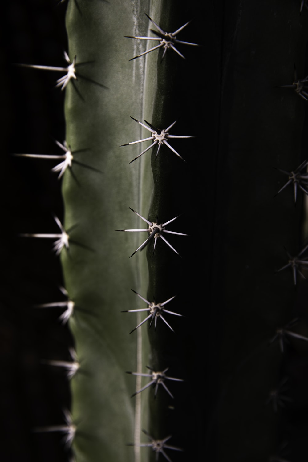low-light photo of cactus plant