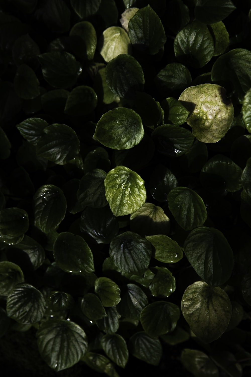 low-light photo of green-leafed plant