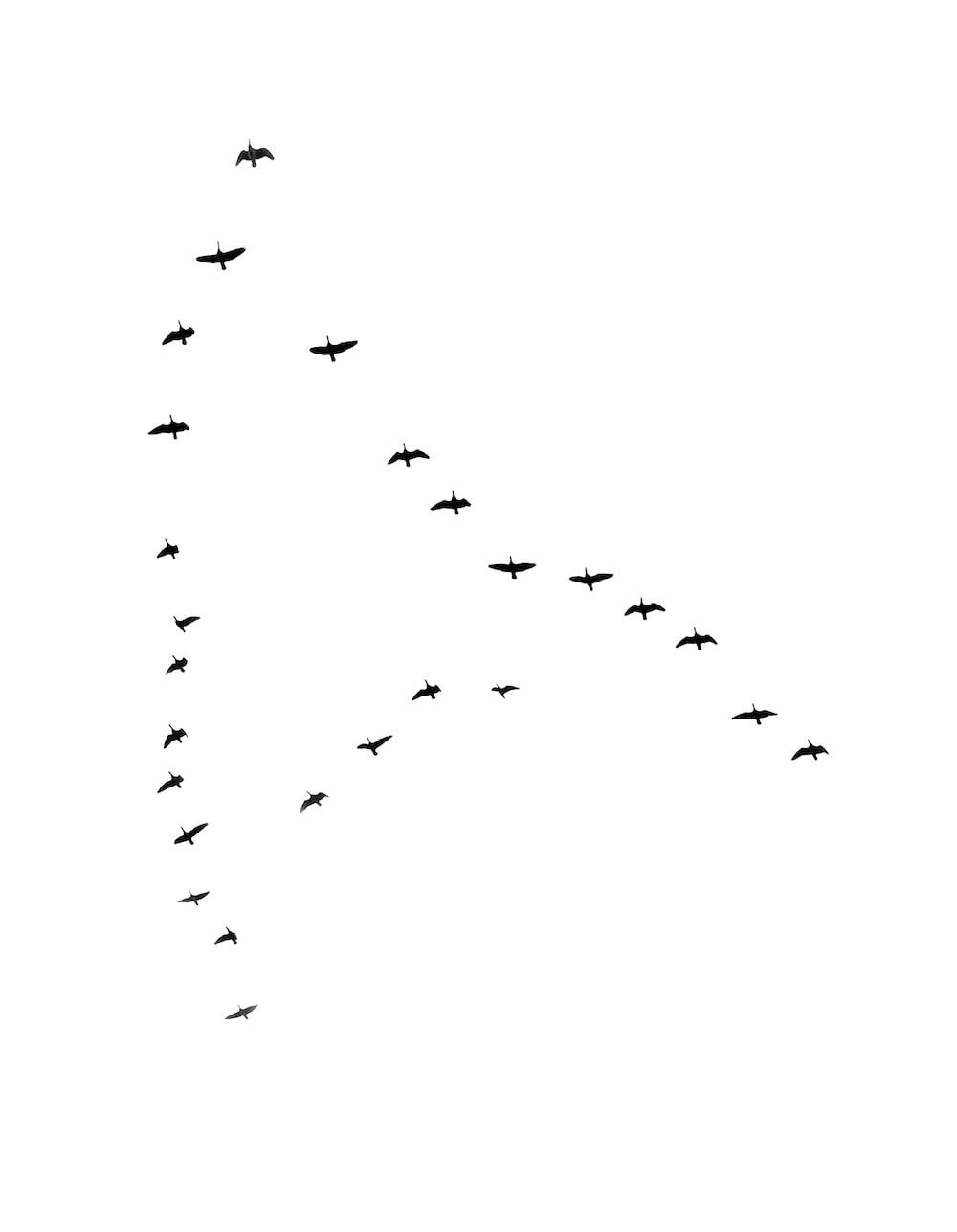 bird at flight