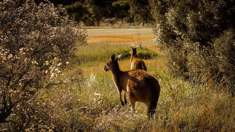 brown deer running on grass field
