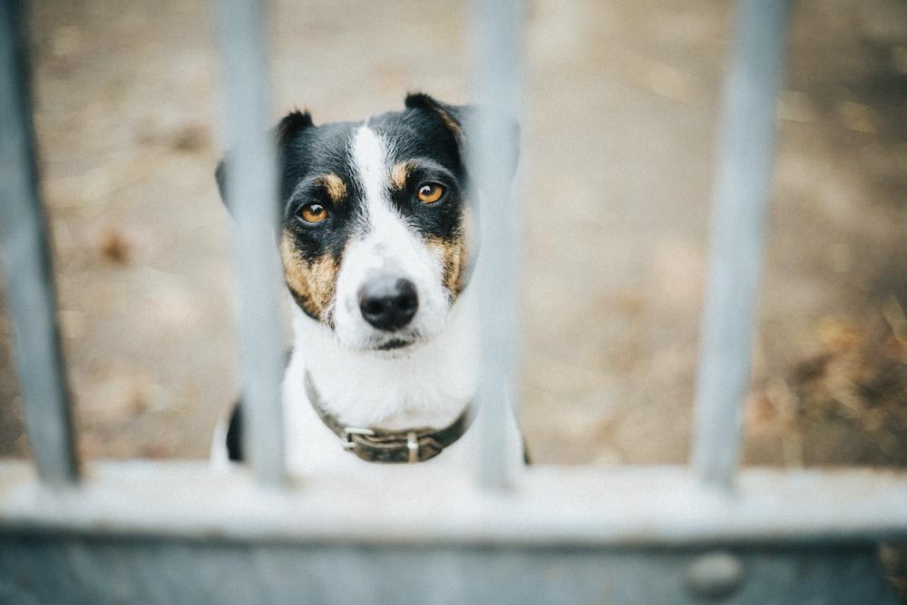 dog behind metal bars