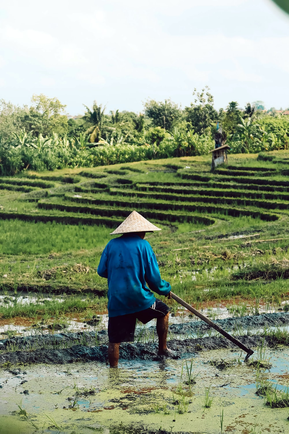 man standing on rice field during daytime
