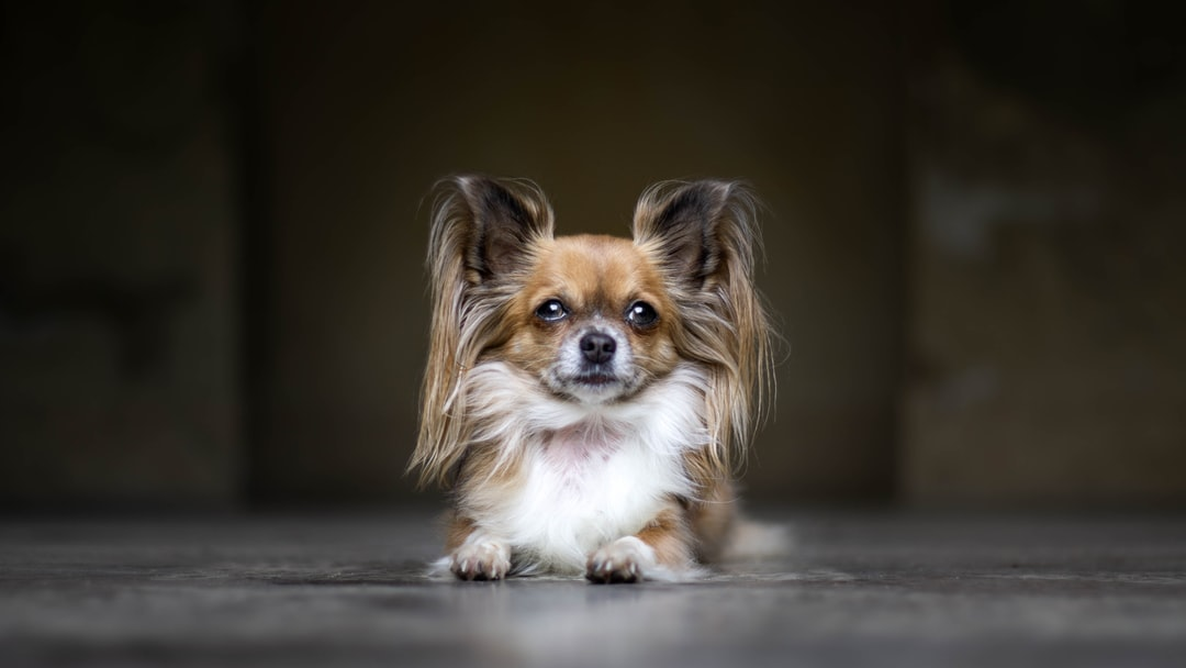 White and Brown Coated Dog - unsplash