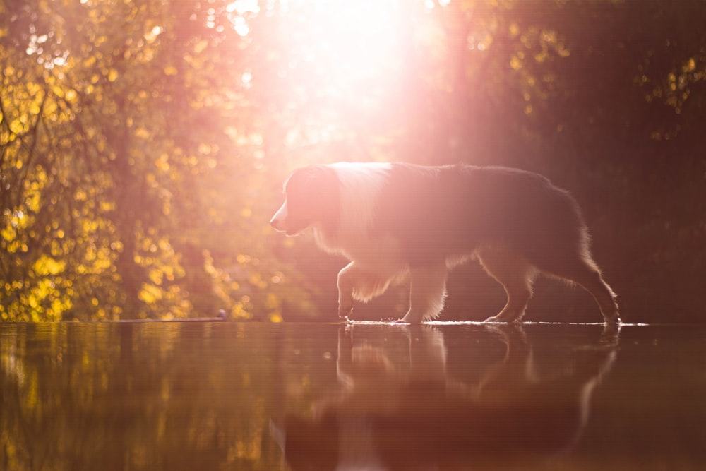 dog on river