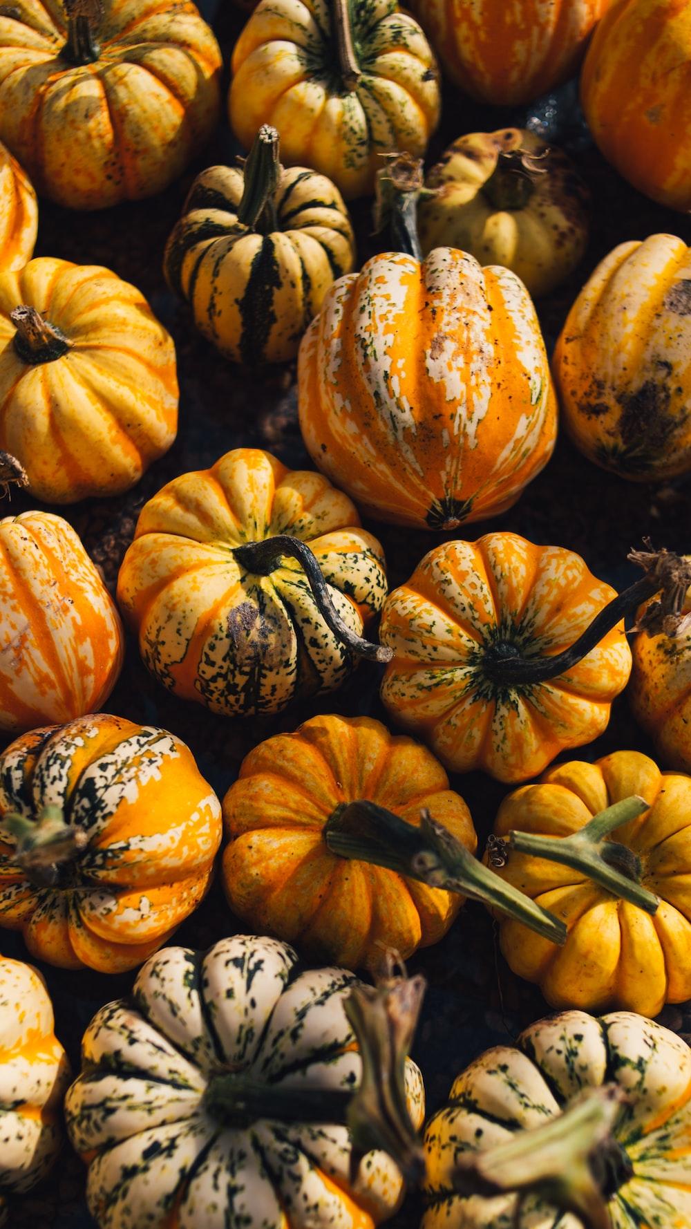 yellow and orange pumpkins
