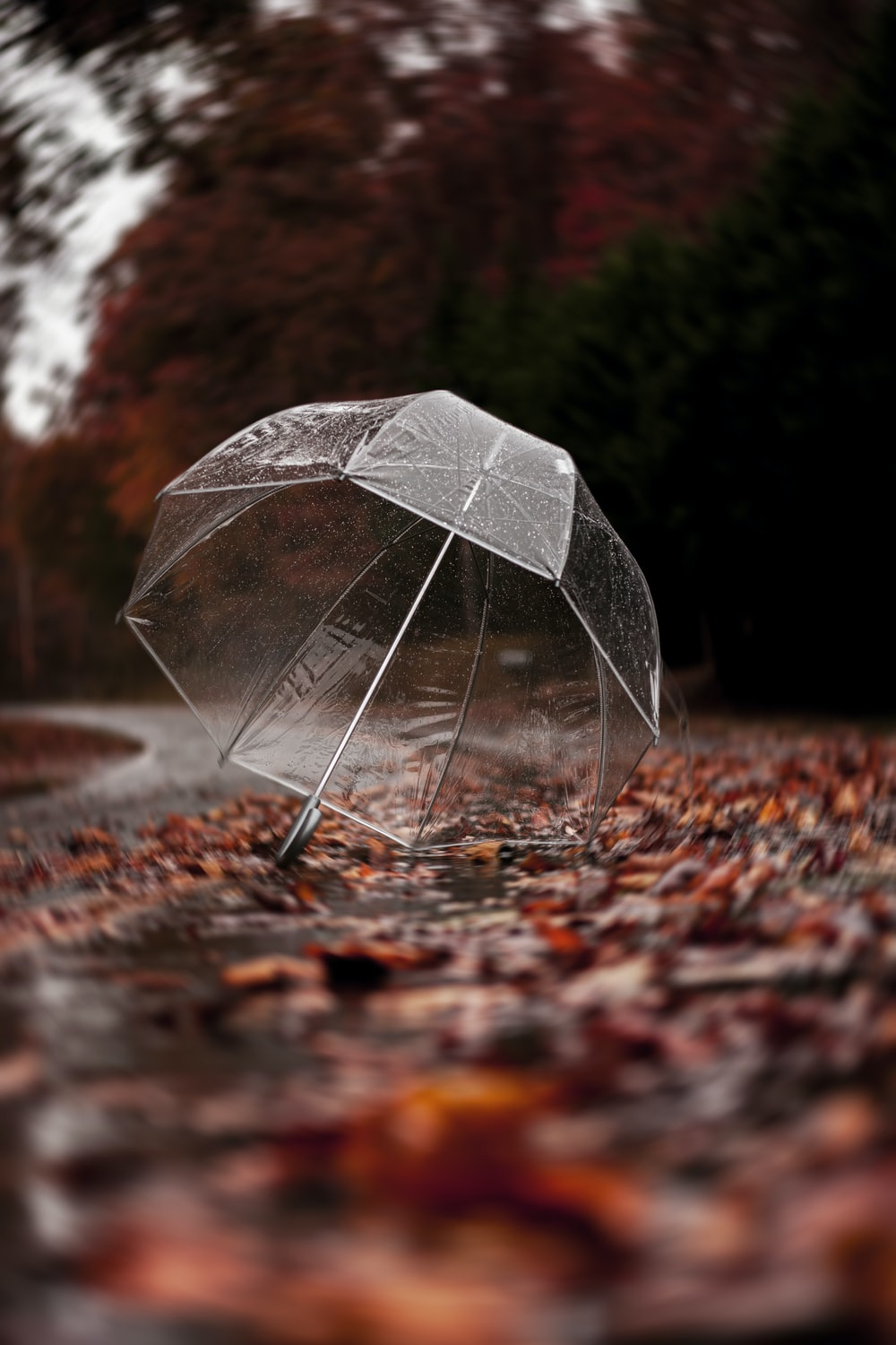 clear plastic umbrella on road filled with leaves